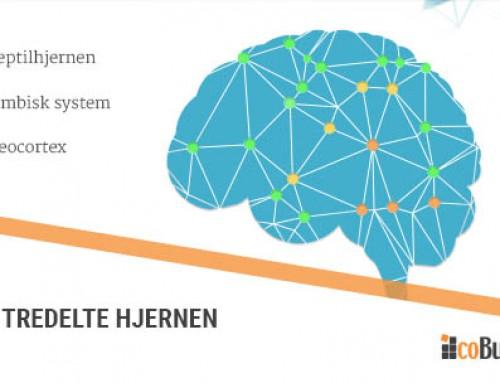 Hjernen er redd for big data og det er helt naturlig
